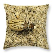 Northern Beach Tiger Beetle Marthas Throw Pillow