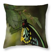 Northern Butterfly Throw Pillow
