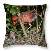 Northern Cardinal At Nest Throw Pillow