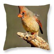 Northern Cardinal Cardinalis Cardinalis Throw Pillow
