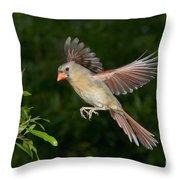 Northern Cardinal Hen Throw Pillow