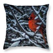 Northern Cardinal In Winter Throw Pillow