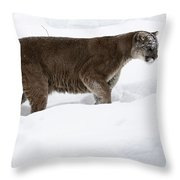 Northern Depths Cougar In The Winter Snow Throw Pillow by Inspired Nature Photography Fine Art Photography