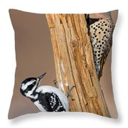Northern Flicker And Hairy Woodpecker Throw Pillow by Jim Zipp