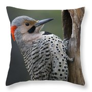 Northern Flicker At Nest Cavity Alaska Throw Pillow