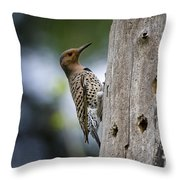 Northern Flicker Pictures 35 Throw Pillow