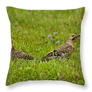 Northern Flicker Pictures 42 Throw Pillow