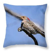 Northern Flicker Pictures 5 Throw Pillow