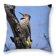 Northern Flicker Pictures 8 Throw Pillow