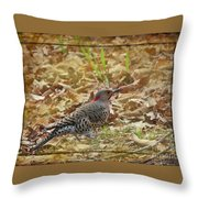 Northern Flicker Woodpecker Throw Pillow