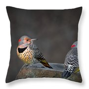 Northern Flickers Throw Pillow