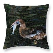 Northern Gannet Feeding Throw Pillow