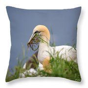 Northern Gannet Gathering Nesting Material Throw Pillow