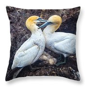 Northern Gannets And Chick 2 Throw Pillow