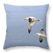 Northern Gannets In Flight Throw Pillow