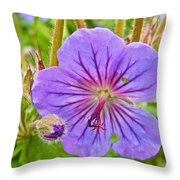 Northern Geranium By Transfiguration Of Our Lord Russian Orthodox Church In Ninilchik-ak Throw Pillow