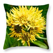 Northern Goldenrod On Alpine Tundra Trail By Eielson Visitor's Center In Denali Np-ak Throw Pillow