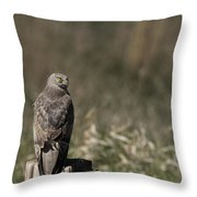 Northern Harrier At Rest Throw Pillow