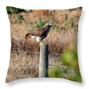 Northern Harrier Throw Pillow