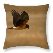 Northern Harrier Painterly Throw Pillow