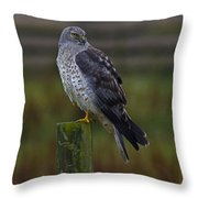 Northern Harrier Throw Pillow