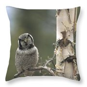 Northern Hawk Owl In The Spring Alaska Throw Pillow