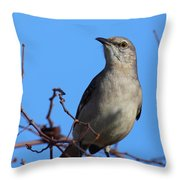 Northern Mockingbird IIi Throw Pillow