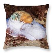 Northern Moon Snail Throw Pillow