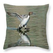 Northern Pintail Drake Tail Touching Throw Pillow