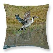 Northern Pintail Drake Taking Throw Pillow