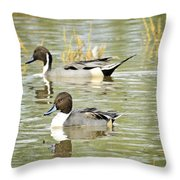 Northern Pintail Ducks  Throw Pillow