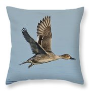 Northern Pintail Hen Throw Pillow