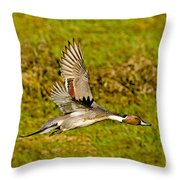 Northern Pintail In Flight Throw Pillow