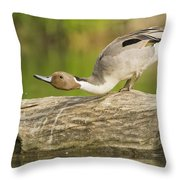 Northern Pintail  Throw Pillow
