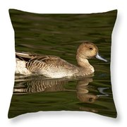 Northern Pintail Molting Throw Pillow