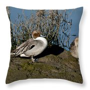 Northern Pintail Pair At Rest Throw Pillow