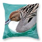 Northern Pintail Throw Pillow