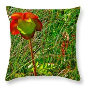 Northern Pitcher Plant In French Mountain Bog In Cape Breton Highlands-nova Scotia  Throw Pillow