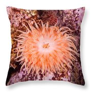 Northern Red Anemone Throw Pillow