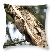 Northern Red Shafted Flicker Throw Pillow