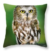 Northern Saw-whet Owl Aegolius Acadicus Wildlife Rescue Throw Pillow