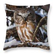 Northern Saw-whet Owl.. Throw Pillow