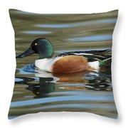 Northern Shoveler Drake Throw Pillow