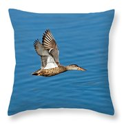 Northern Shoveler In Flight Throw Pillow