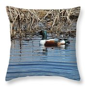 Northern Shoveler Swim Throw Pillow