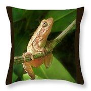 Northern Spring Peeper Throw Pillow
