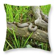 Northern Water Snake - Nerodia Sipedon Throw Pillow