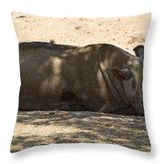 Northern White Rhinoceros - Ceratotherium Simum Cottoni Throw Pillow