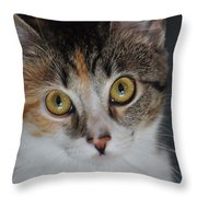 Nosey Lil Kitty Throw Pillow