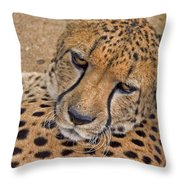 Not So Fast Throw Pillow